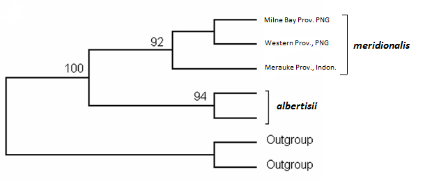 Cladogram from Schleip (2008)